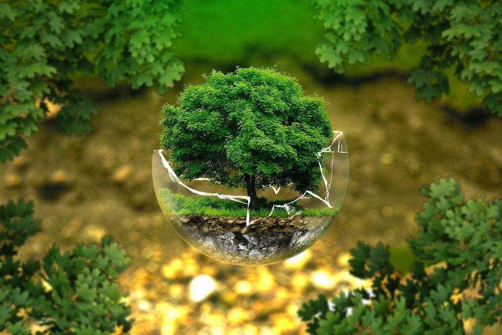 eccity s'engage pour l'environnement